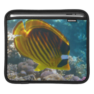 Gelbe und schwarze Engels-Fische iPad Sleeve