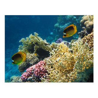 Gelbe und schwarze Schmetterlings-Fische Postkarte