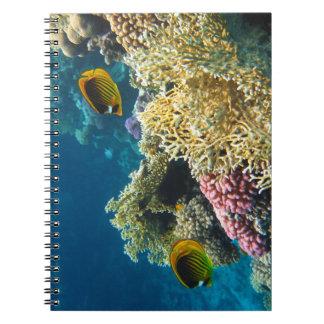 Gelbe und schwarze Schmetterlings-Fische Spiral Notizblock