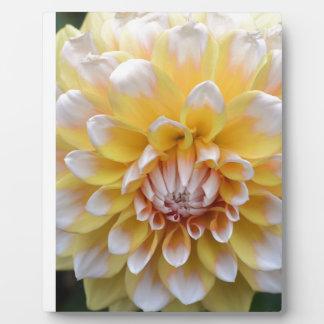 Gelbe und weiße Dahlie Fotoplatte