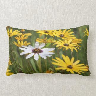 Gelbe weiße Blumen sonnig und positives Kissen