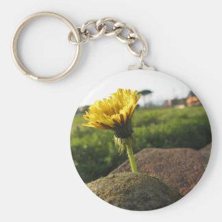 Gelbe Wildblume, die auf Steinen am Schlüsselanhänger