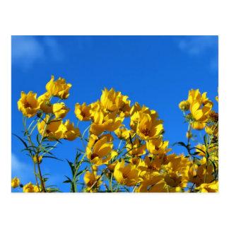 Gelbe Wildblumen-heller Himmel Postkarte