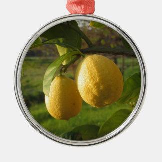 Gelbe Zitronen, die auf dem Baum am Silbernes Ornament