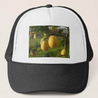 Gelbe Zitronen, die auf dem Baum am Truckerkappe