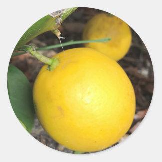 Gelbe Zitronen Runder Aufkleber