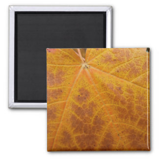 Gelber Ahorn-Blatt-Herbst-abstrakte Natur Quadratischer Magnet