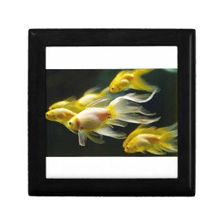 Gelber extravaganter AquariumGoldfish Erinnerungskiste