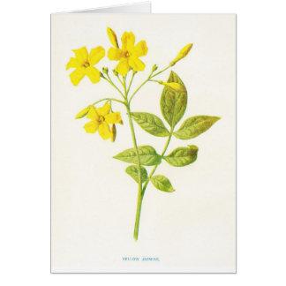 Gelber Jasmin-Vintage botanische Illustration Karte