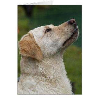 Gelber Labrador Karte