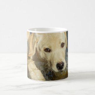 Gelber Labrador retriever-Welpe, der Wasser Kaffeetasse