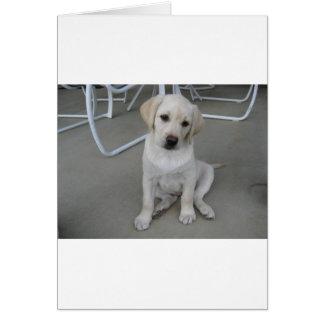 Gelber Labrador retriever-Welpe Karte