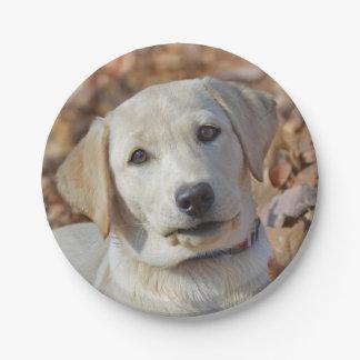 Gelber Labrador retriever-Welpe Pappteller