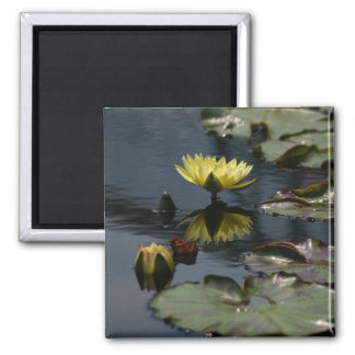 Gelber Lotos-Wasserliliemagnet Quadratischer Magnet