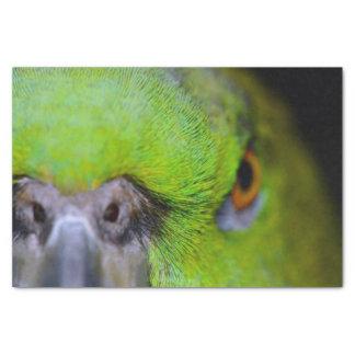 Gelber-Naped Amazonas-Papagei durch Shirley Taylor Seidenpapier