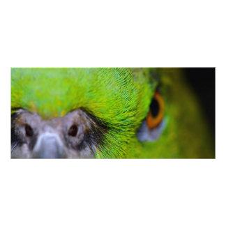 Gelber-Naped Amazonas-Papagei durch Shirley Taylor Werbekarte