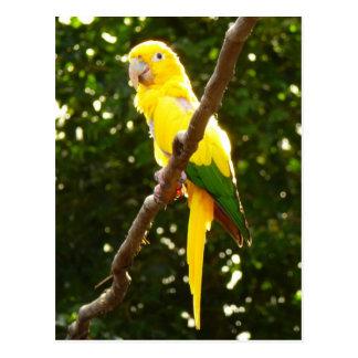 Gelber Papagei Postkarte
