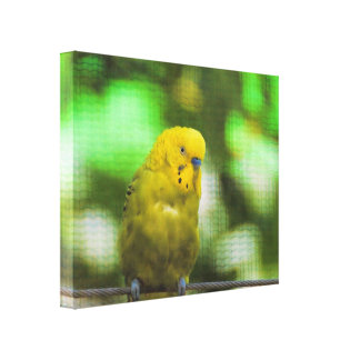 Gelber Parakeet Gespannter Galeriedruck