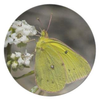 Gelber Schmetterling Melaminteller