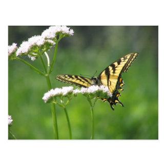 Gelber Schmetterling Postkarte