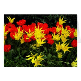 Gelber Stern der Frühlings-Blumen und rote Tulpen Karte