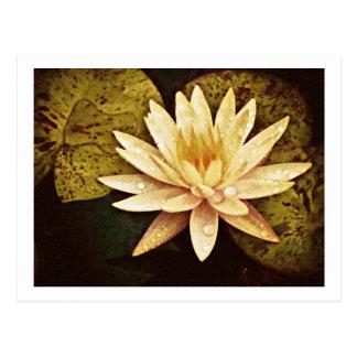 Gelber Teich-Lilie Postkarte