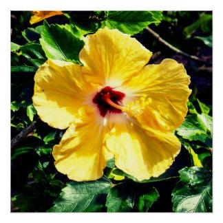 Gelber tropischer Hibiskus Poster