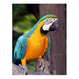 Gelber u. blauer Macawvogel Postkarte