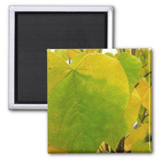 Gelber und grüner Redbud verlässt Herbst-Natur Quadratischer Magnet