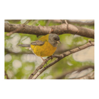 Gelber Vogel Holzleinwand