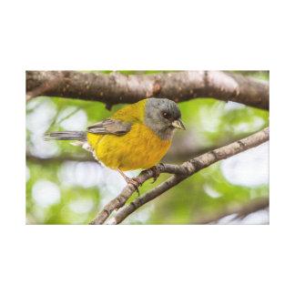 Gelber Vogel Leinwanddruck