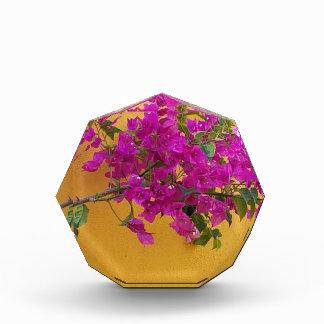 Gelber Wand-Rosa-Blumen-Bogen-Sonnenschein Acryl Auszeichnung