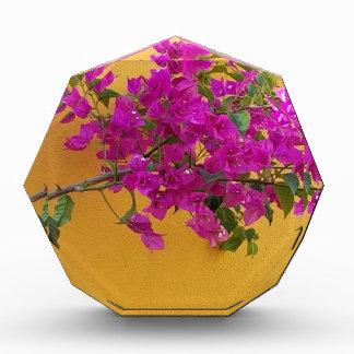 Gelber Wand-Rosa-Blumen-Bogen-Sonnenschein Auszeichnung