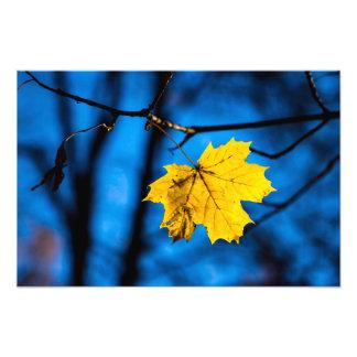Gelbes Ahornblatt auf Blau Fotodruck