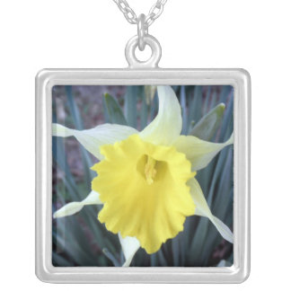 Gelbes Blumen-Narzissen-Narzissen-Blumen-Foto Versilberte Kette