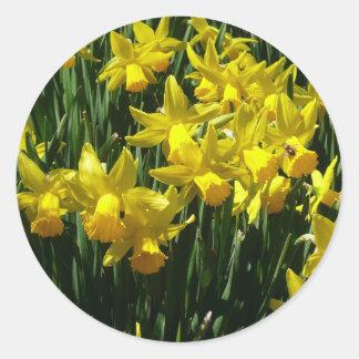 Gelbes heitre Frühlings-Blumen der Narzissen-I Runder Aufkleber