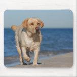 Gelbes labrador retriever auf dem Strand Mauspad