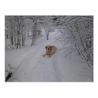 Gelbes Labrador retriever, das im frischen Postkarte