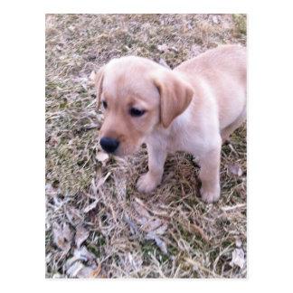 Gelbes Labrador retriever Postkarte
