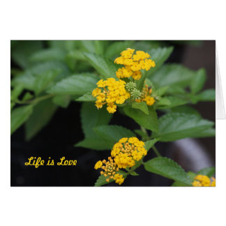 Gelbes Lantana-Leben ist Liebe-Gruß-Karte Karte