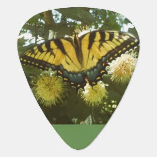 Gelbes Monarch-Plektrum Plektrum