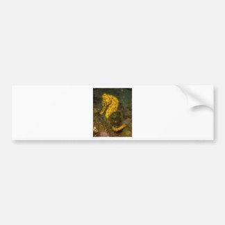 Gelbes Seepferd Autoaufkleber