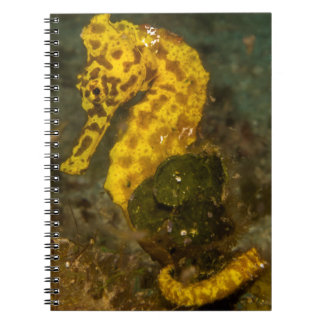 Gelbes Seepferd Notizblock