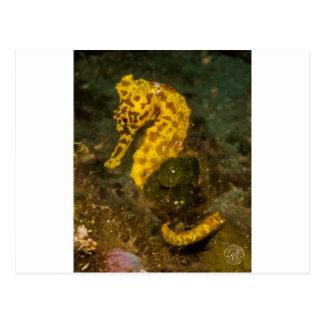 Gelbes Seepferd Postkarte