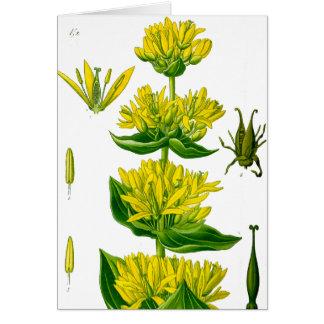 Gelbes Vintages Kraut des Frühlinges Karte