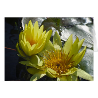 Gelbes Wasser-Lilien Grußkarte