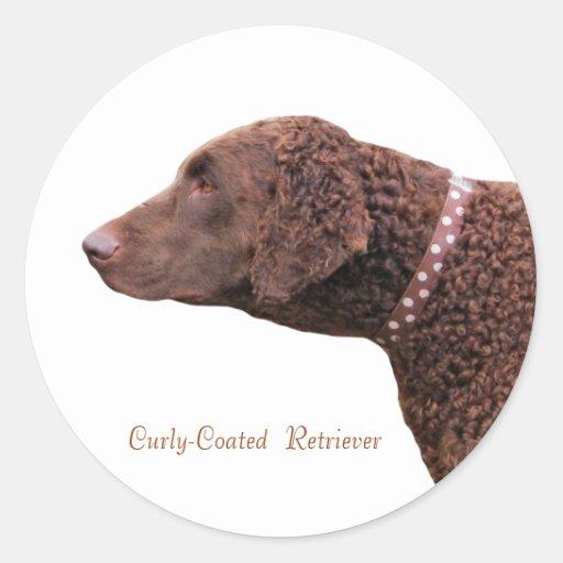 Gelockte überzogene Retrieverhundeaufkleber, Gesch Runde Sticker