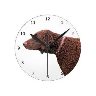 Gelockter überzogener Retrieverhundeschönes Foto Uhren