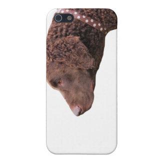 Gelockter überzogener Retrieverhundiphone 4 Fall, iPhone 5 Etuis