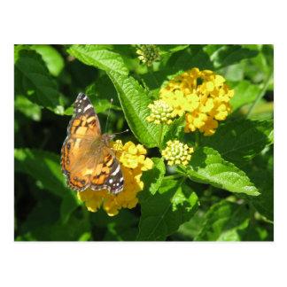 Gemalte Dame Butterfly auf Lantana Postkarte